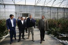 Կառավարության ղեկավարը Կոտայքի մարզում ծանոթացել է վարդերի աճեցմամբ զբաղվող ընկերության ներդրումային նոր ծրագրին